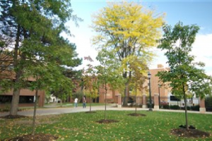 Campus Green Trees